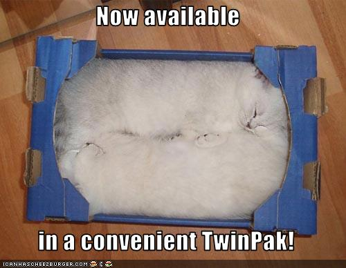 funny-pictures-kittens-are-available-in-a-twin-pack.jpg